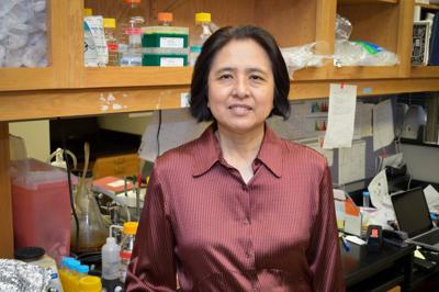 Researchers find new role for thymus
