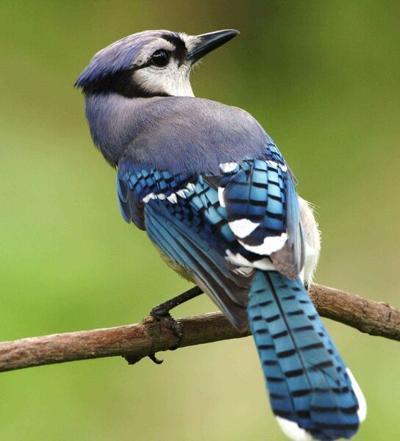 Birding Today: Birds head toward winter food sources