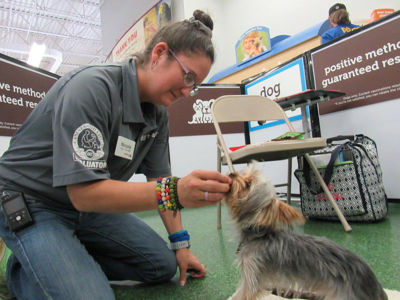 Okie from Muskogee: Six enjoys working with dogs