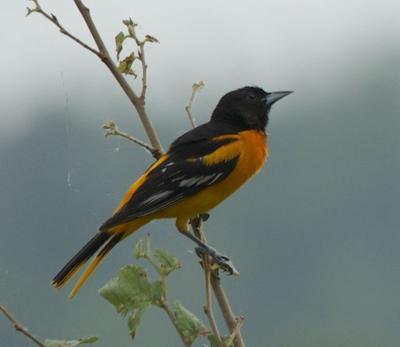 Birding Today: Birds provide warnings to birds, animals