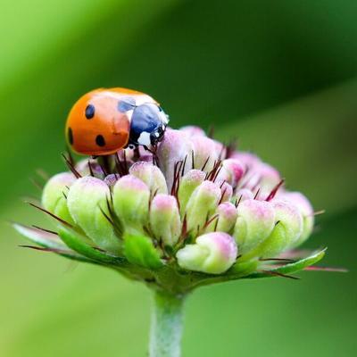 Gardening with Micki: Gardening made easy for seniors