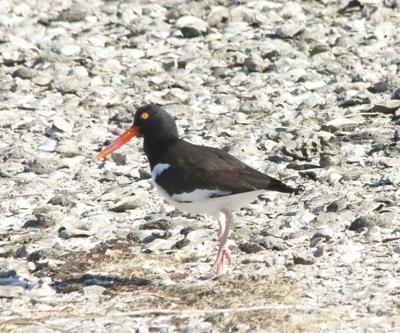 Birding Today: Plastics damage birds, animals and us