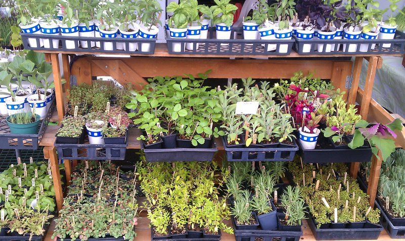 Fresh at the Market — Annual herb, plant sale offers gift ideas for ...