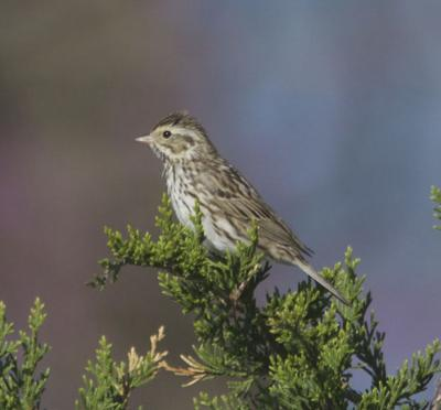 Birding Today: Ecosystems need our help