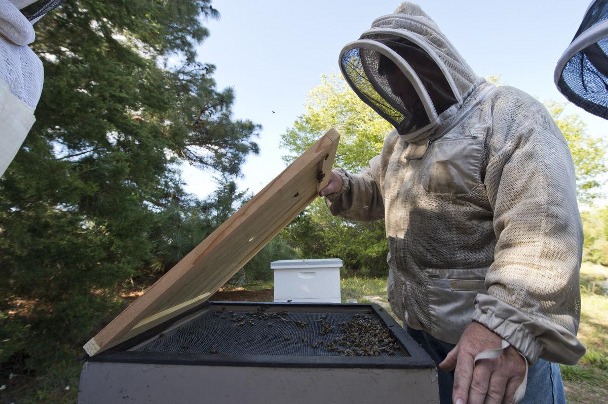 Beekeeper010 tfh.jpg