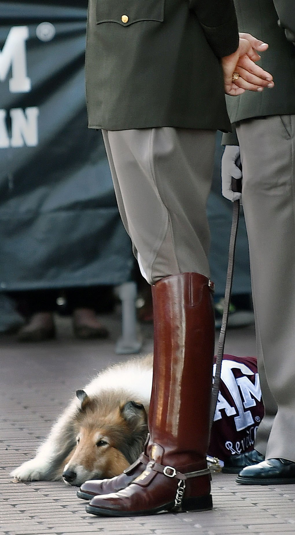 Reveille Viii Laid To Rest Outside Kyle Field Campus