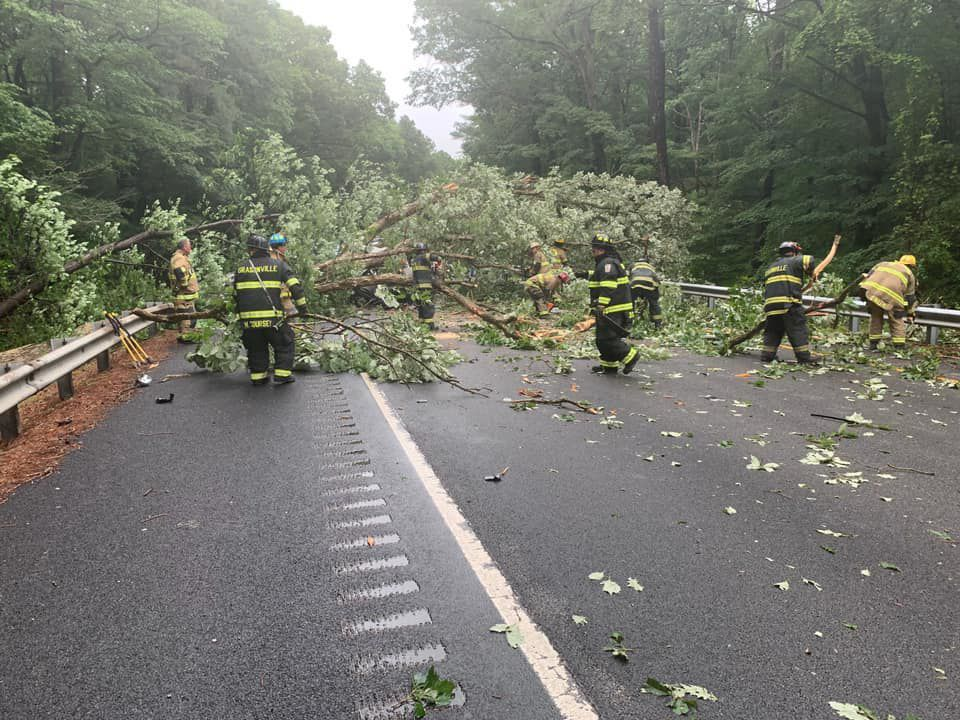 Tree falls trapping driver, blocking road | Police and Fire