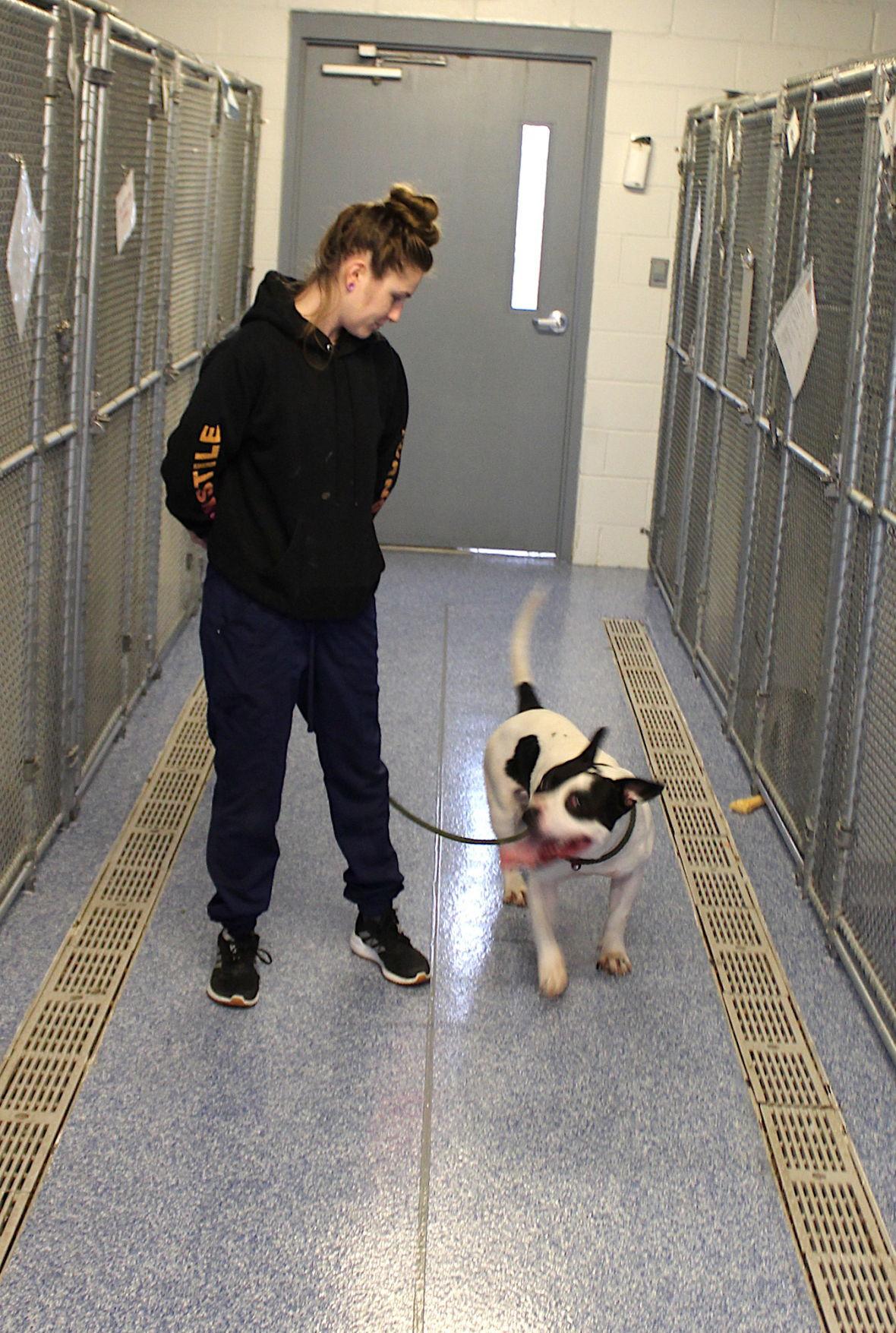 QA Animal Shelter new flooring '20