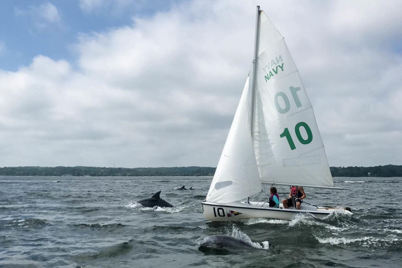 Number of dolphins in the Bay on the rise this summer