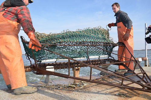 Virginia Crab Dredge 2020 Blue Crab Survey