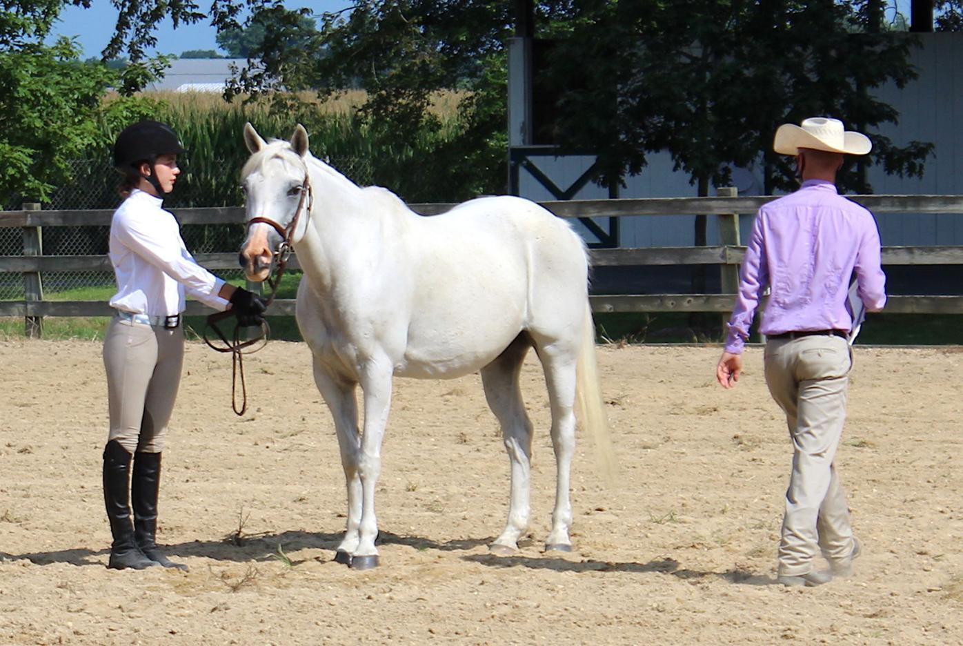 QA English horse show '20