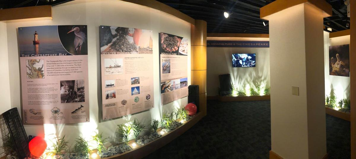 Hyatt unveils new educational oyster farming exhibit