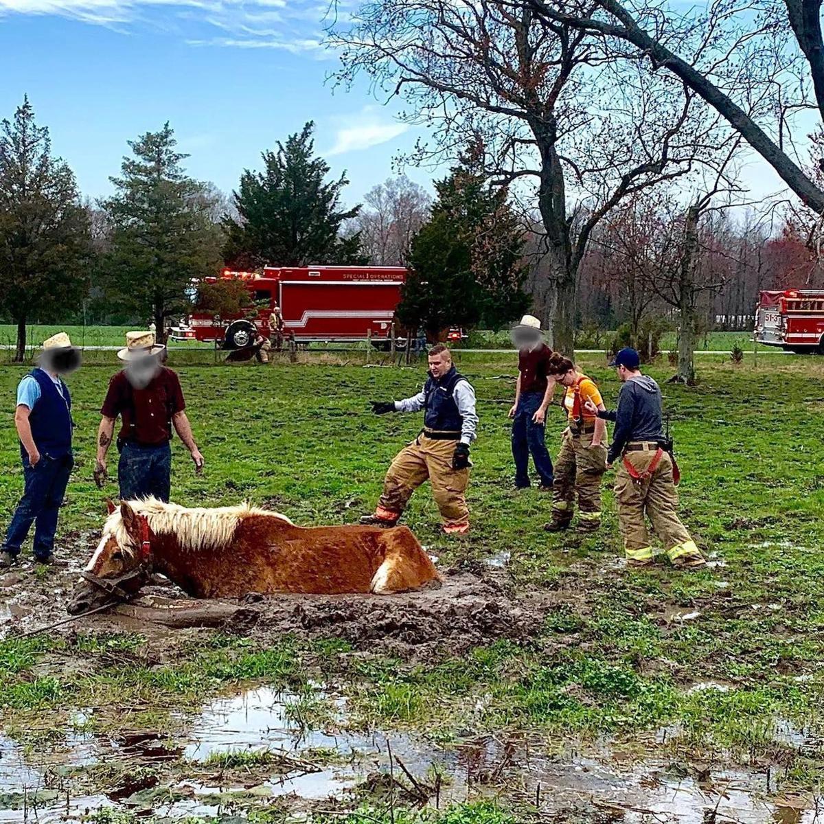 Crews work tirelessly to free horse