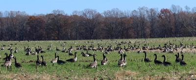 Migratory game bird hunting seasons submitted for approval