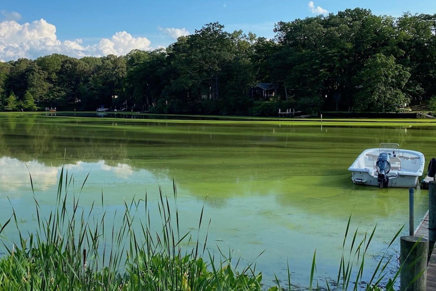 Toxic algae bloom reported in Sassafras