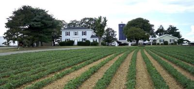 Ed and Marian Fry place 191 acres of farmland in easement