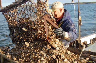 Oyster season ends