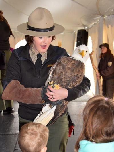 Eagle Festival visitors get up-close looks at eagle