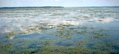 Grasses sees more growth in Bay