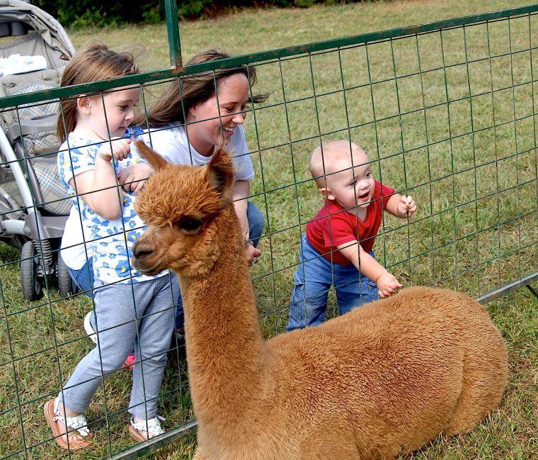 Alpaca Festival at Outstanding Dreams Farm