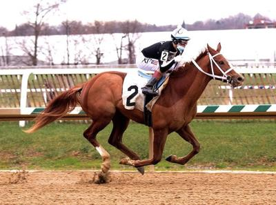 Kent products among nominees for Maryland-bred division honors