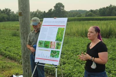 Hemp study suggests plant may not yet be the right move for farmer