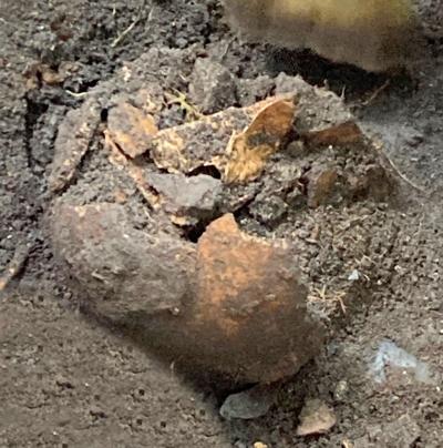 Bottle collector's dig yields 'historic' bones