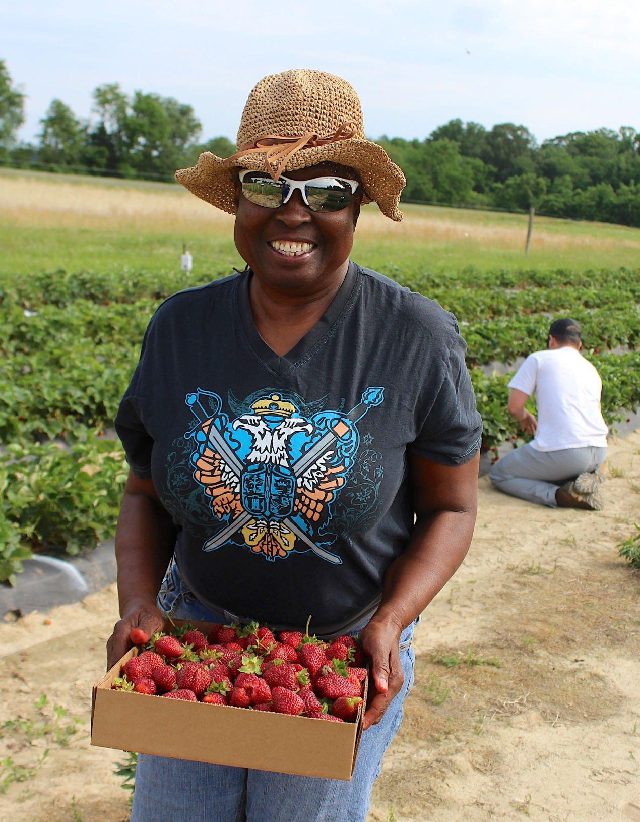 Strawberries gleaned '21