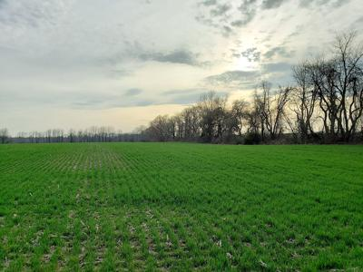 Maryland continues funding for protective crop plantings