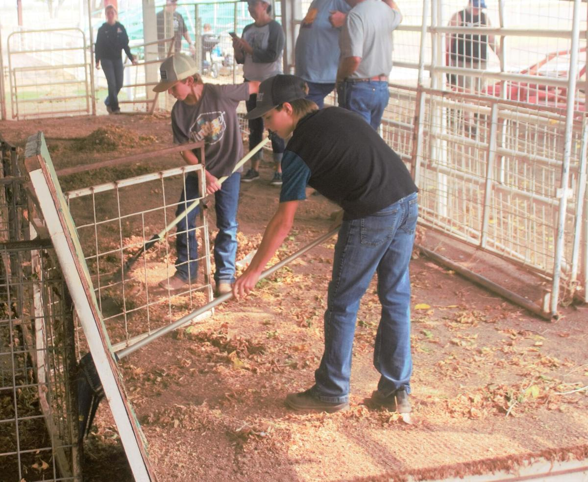 Preparing for the upcoming livestock show and sale