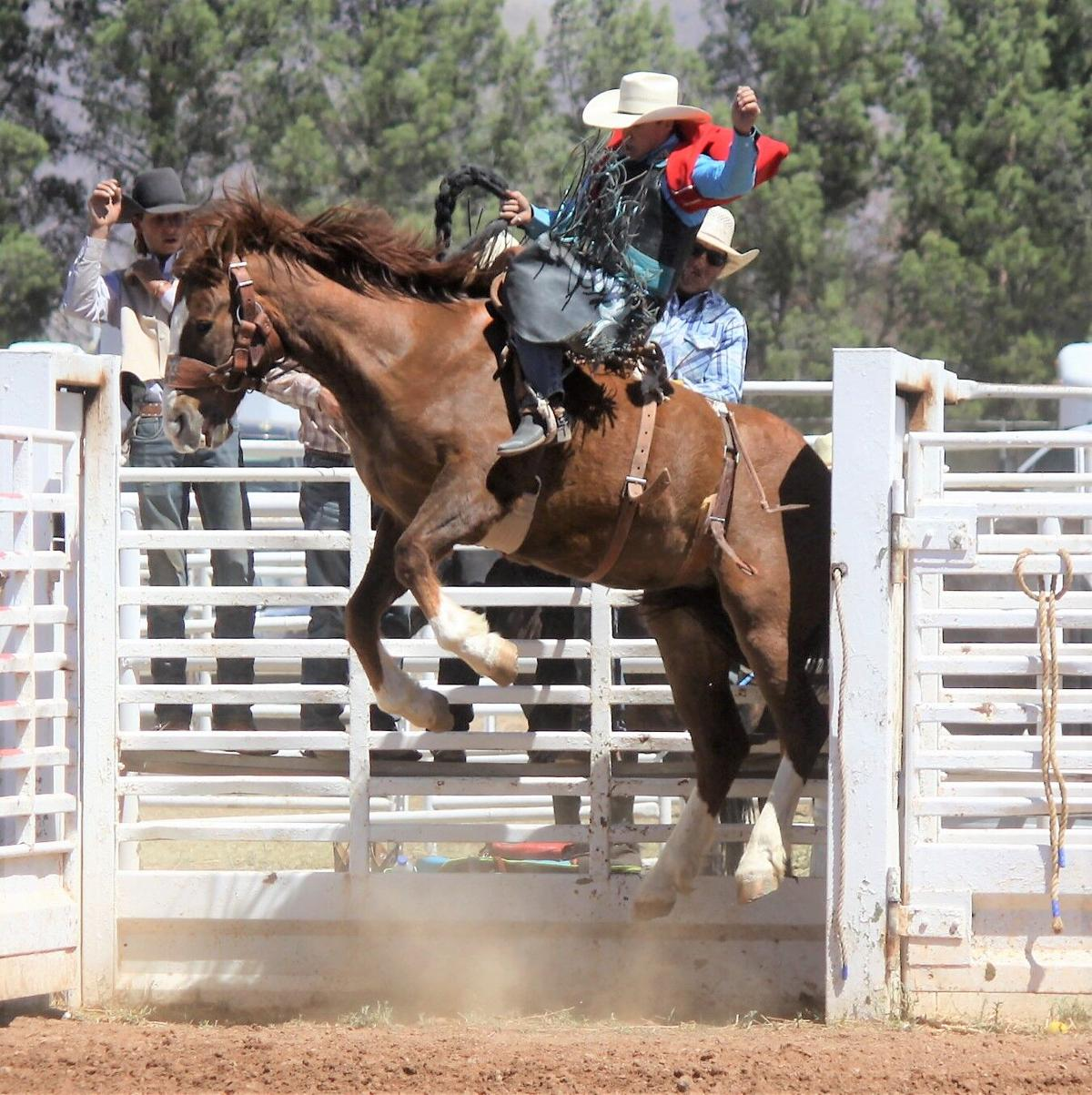 CC rodeo headed back to CNFR