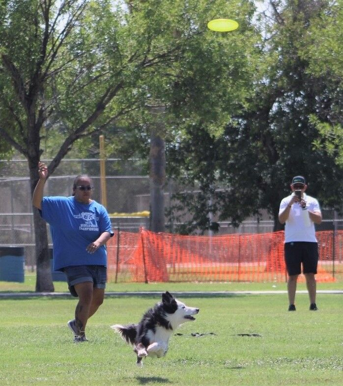 K9 competition attracts 43 teams