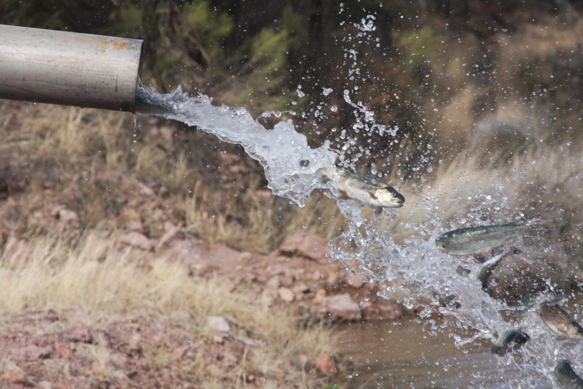 Fishing Report keeps anglers informed   Local News Stories