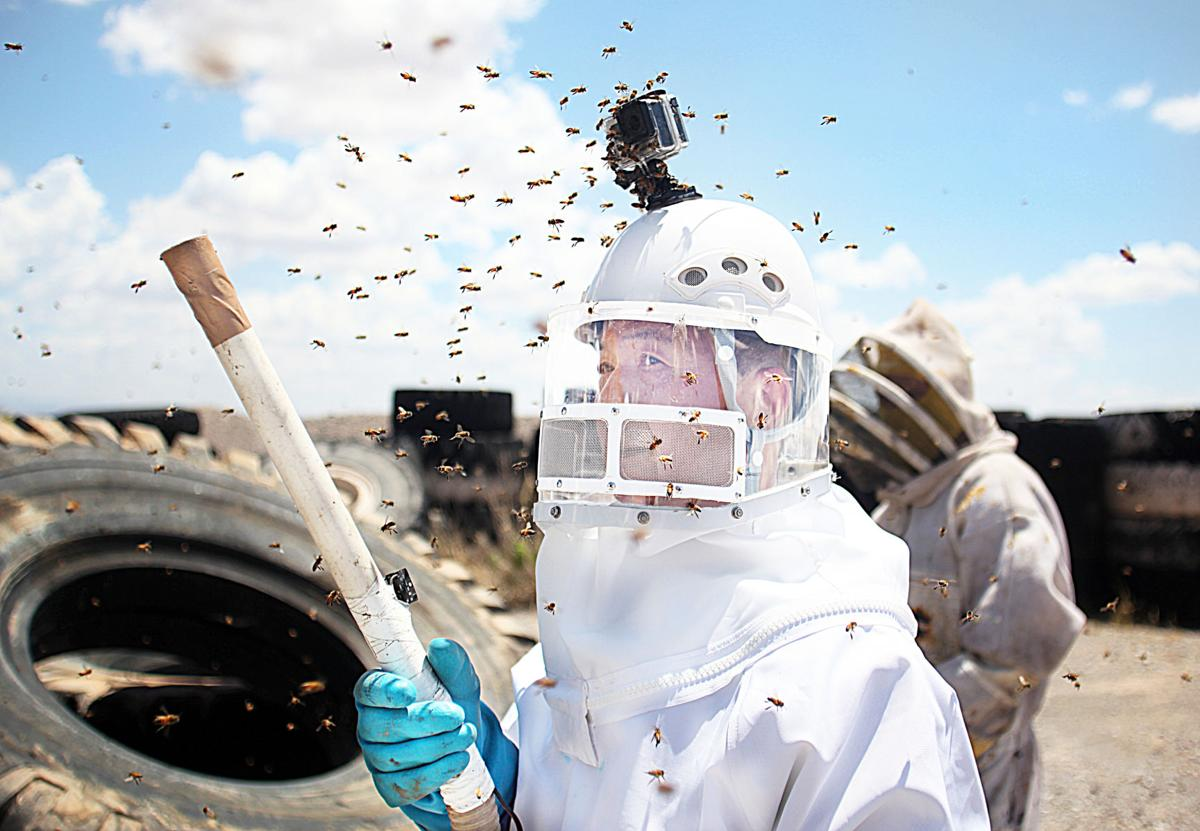 'Killer Bee Guy' carries out massive hive removal outside Bisbee