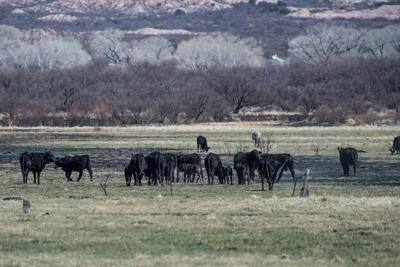BLM opens public comment on grazing in SPRNCA