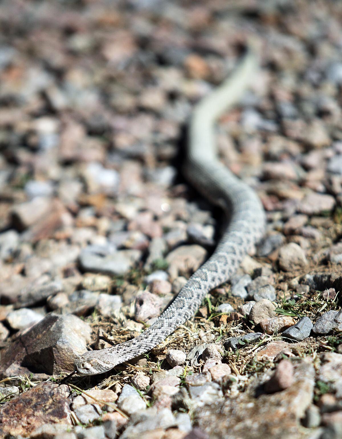 snake guy 2