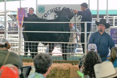 Livestock show, sale still on despite no county fair