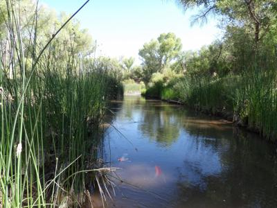 Lawsuits seek to limit impacts of growing population, cattle grazing on San Pedro River
