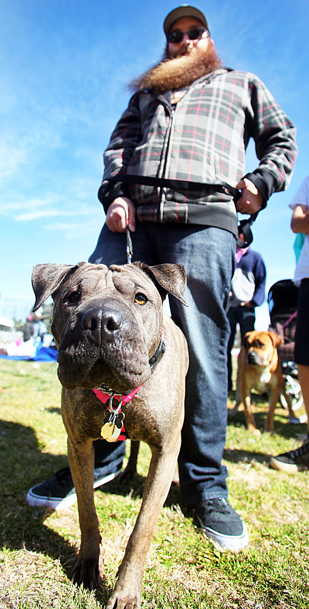 Celebrating animals at Veterans Memorial Park