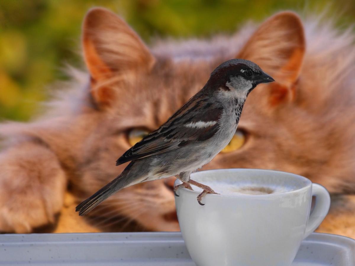sparrow-2615761_1920.jpg