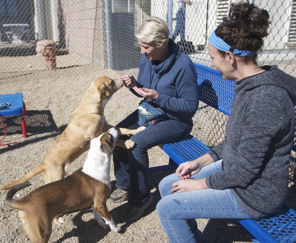 Bursting at the seams: Animal shelter urges fostering, adoptions of dogs and cats