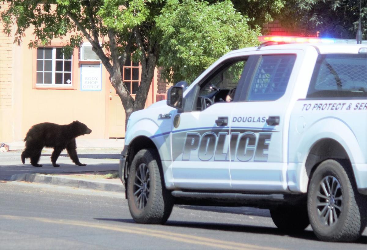 Bear spotted in Douglas