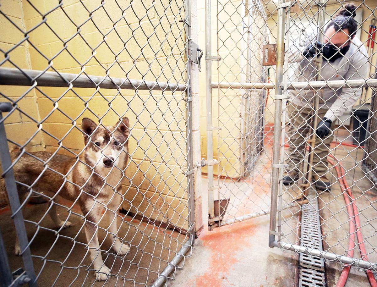 douglas shelter 1