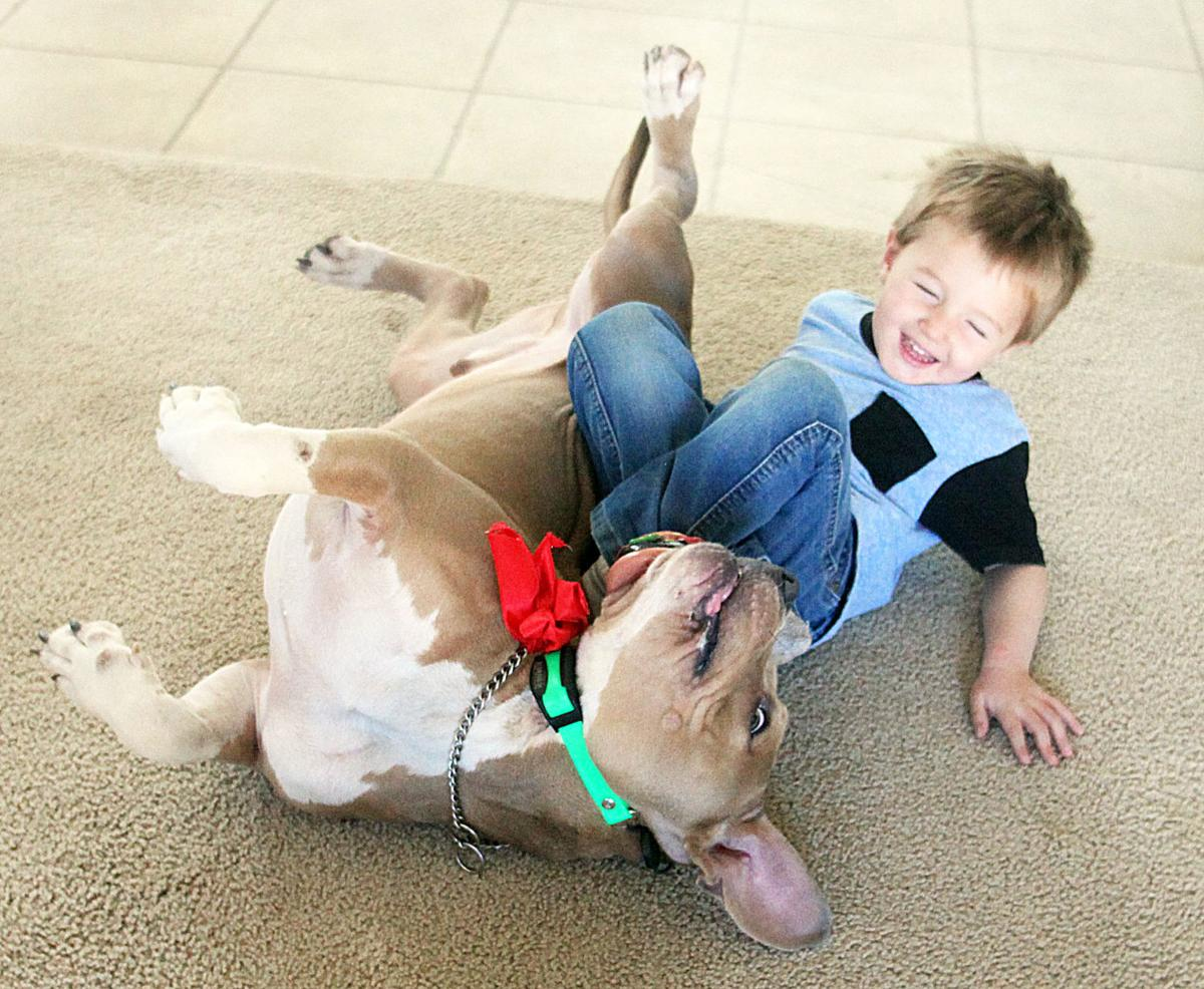 All things pittie and bright: Animal care center holding 'Merry Pitmas' forum about bully breeds