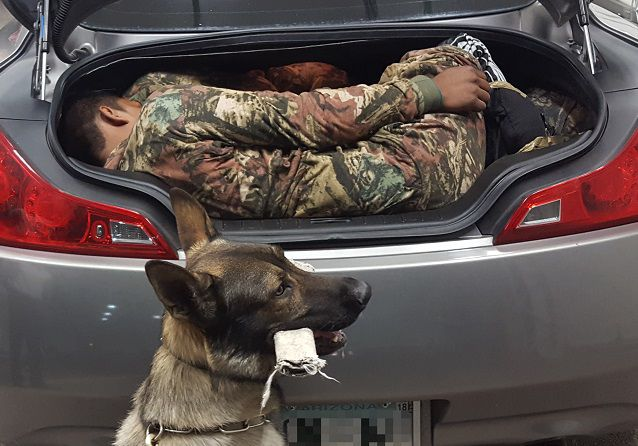 Agents working at the immigration checkpoint north of Whetstone referred a 2008 Infiniti coupe for a secondary inspection after a canine alerted to an odor it was trained to detect. When agents opened the car's trunk, they found two adult males hiding inside.