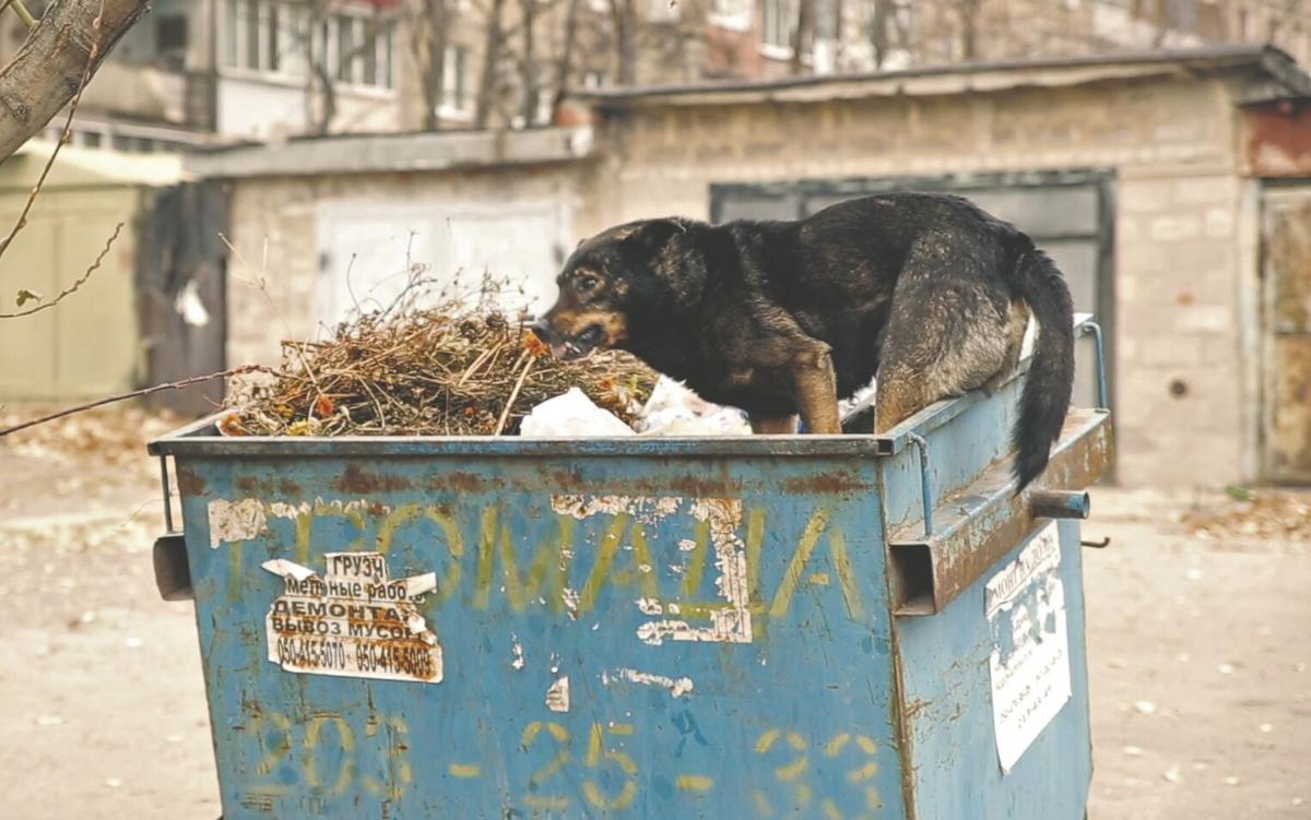 DOGS IN DUMPSTER