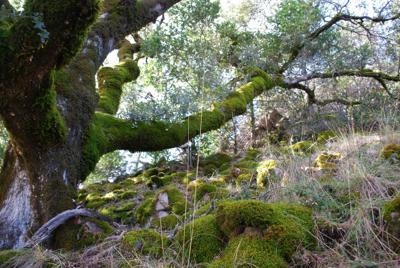 Oak removal permit program in Watershed Initiative