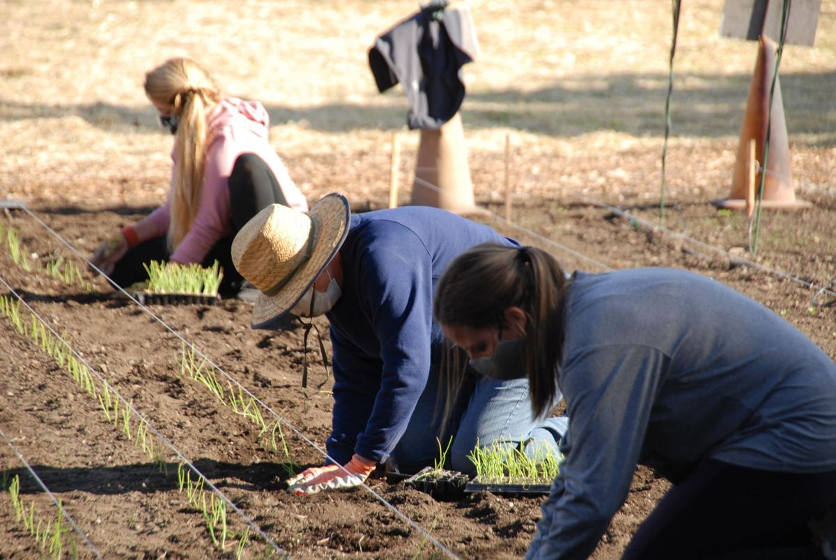Mission Farm and Young Farmers join forces in Napa