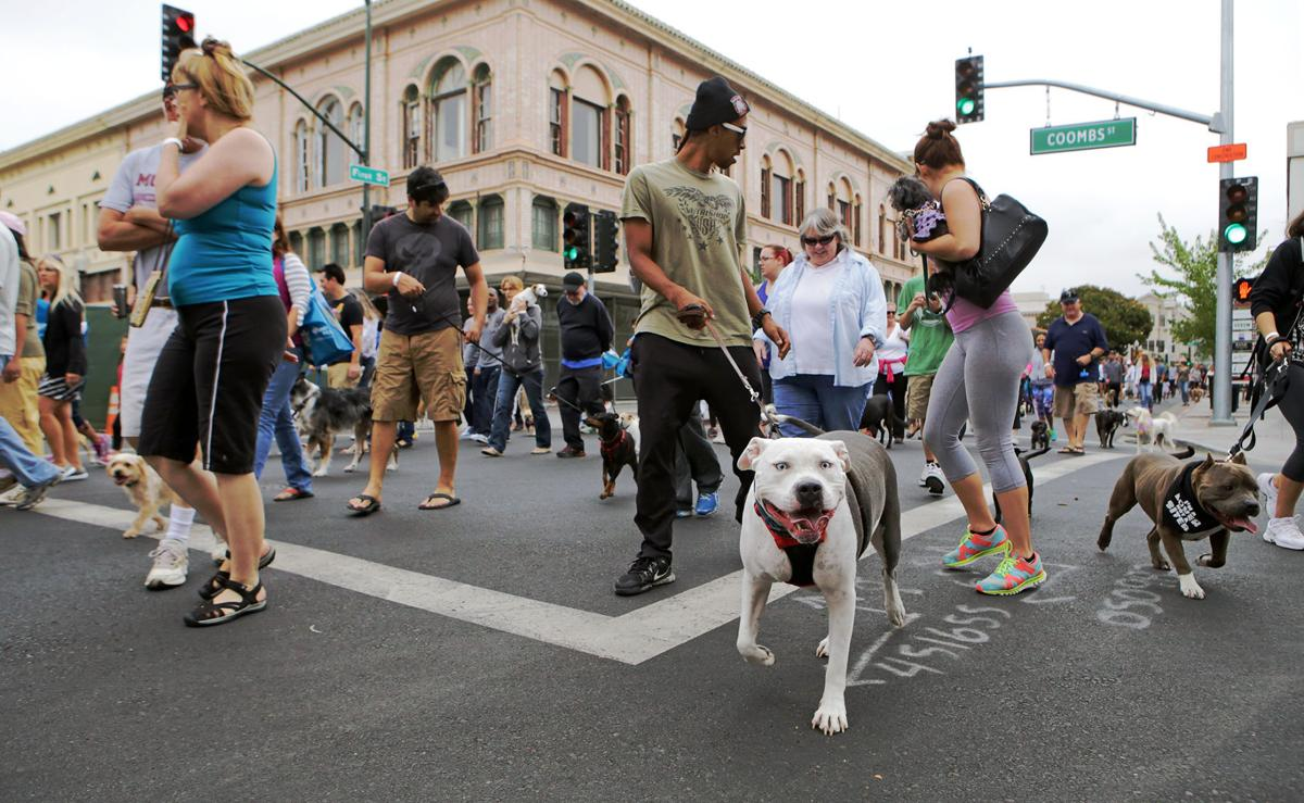 Napa Walk for Animals moving to Oxbow Commons