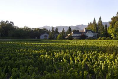 Duckhorn Wine Company (copy)